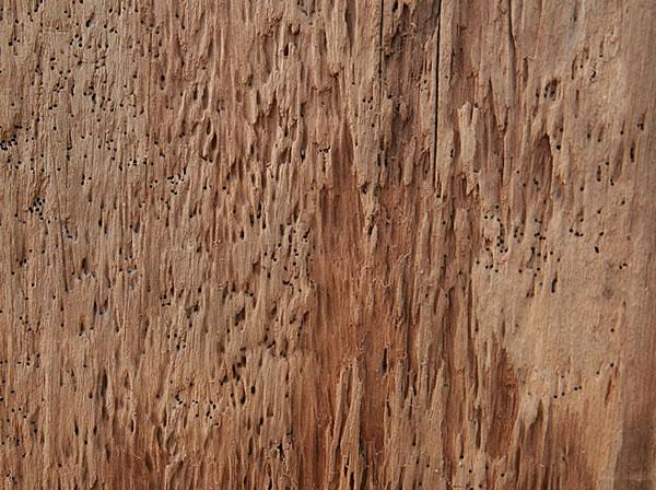 極致工藝:風化樟木板